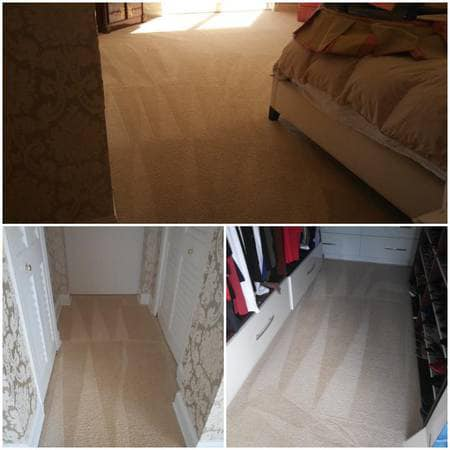 Pet Stain And Odor Removal Services Dallas