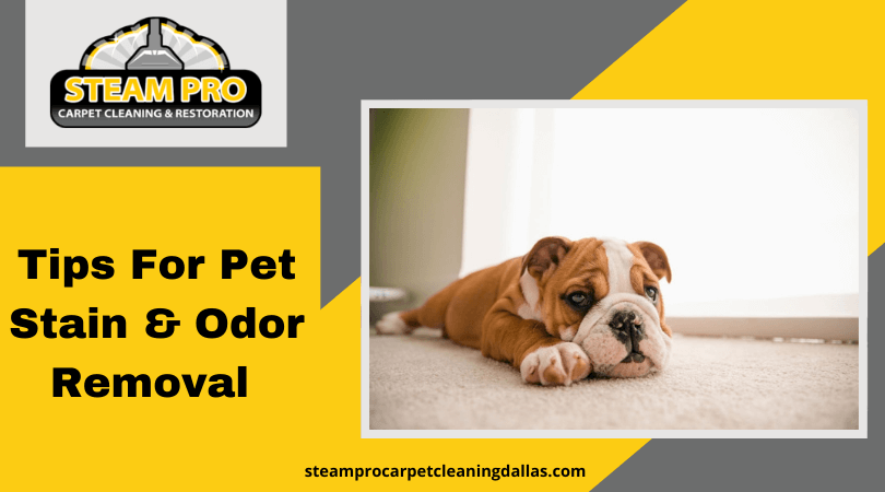 Tips For Pet Stain & Odor Removal Service